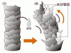 キューティクル構造
