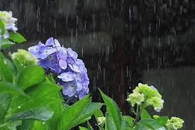 縮毛矯正をかける人が多いのは梅雨などの雨が多い時期